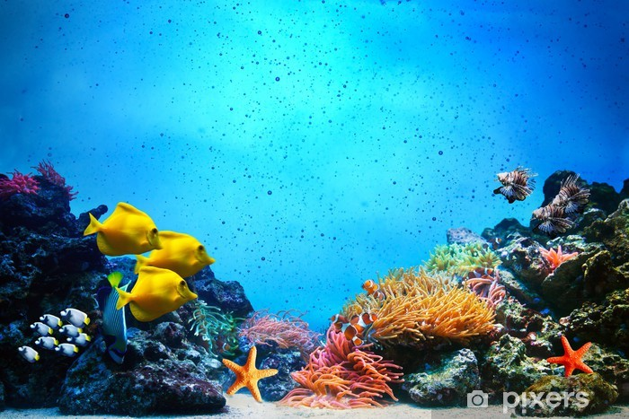 Fotomural Estándar Escena subacuática. Los arrecifes de coral, grupos de peces en el agua clara del océano - Arrecife de coral