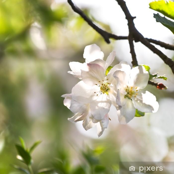 Naklejka Pixerstick Appleblossom wiosną - Pory roku