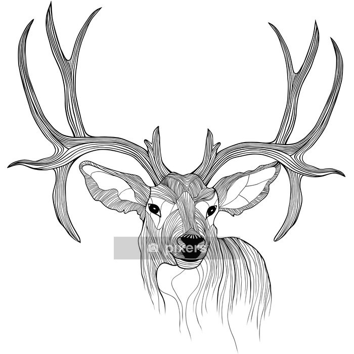 Naklejka na ścianę Głowa jelenia - Nauka i natura