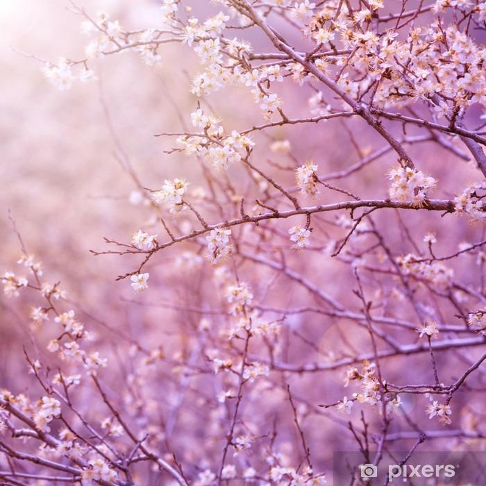 Fototapeta winylowa Wiśniowe drzewo kwiat - Tematy
