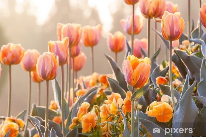 Fototapeta winylowa Pomarańczowy ogród - Tematy
