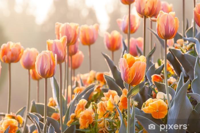 Papier peint vinyle Jardin d'orange - Thèmes