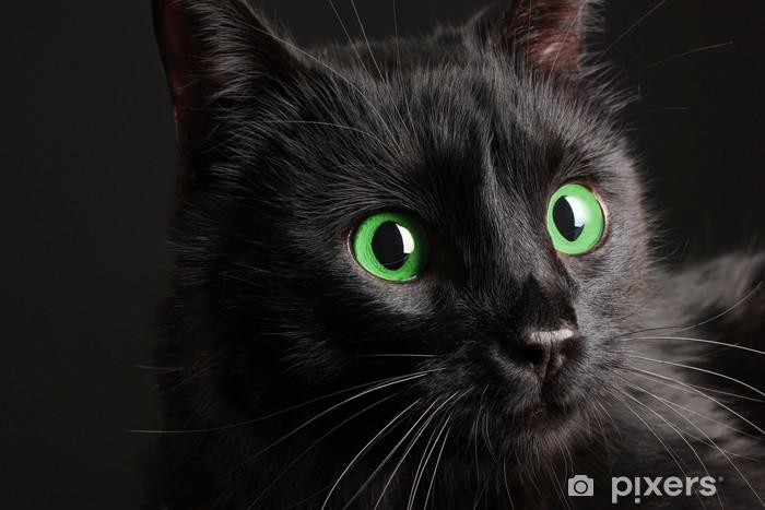 detailní černá kočička fotky