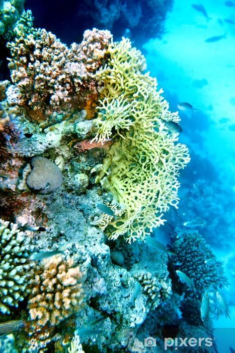 Nálepka Pixerstick Skupina korálových ryb vody. - Květiny