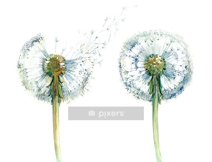 couple od dandelions Wall Decal - Themes