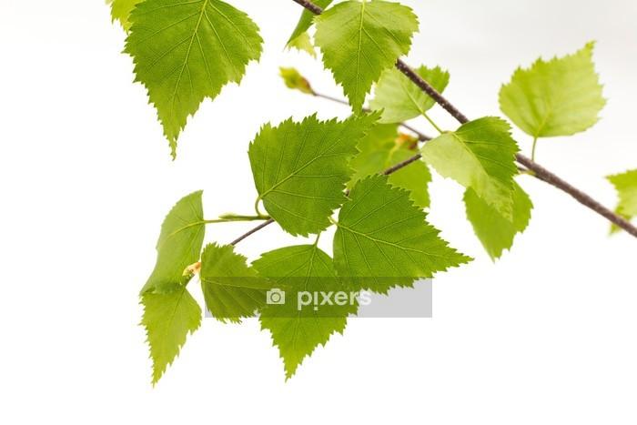Adesivo da Parete Betulla foglie dell'albero. - Alberi e foglie