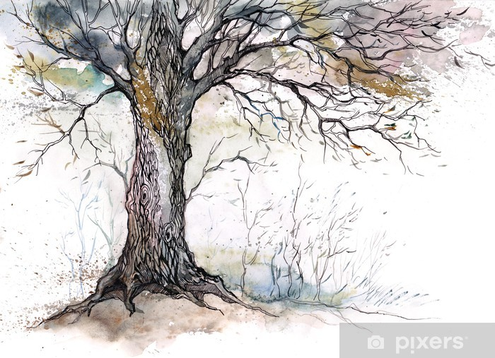 Fototapeta winylowa Stare drzewo -
