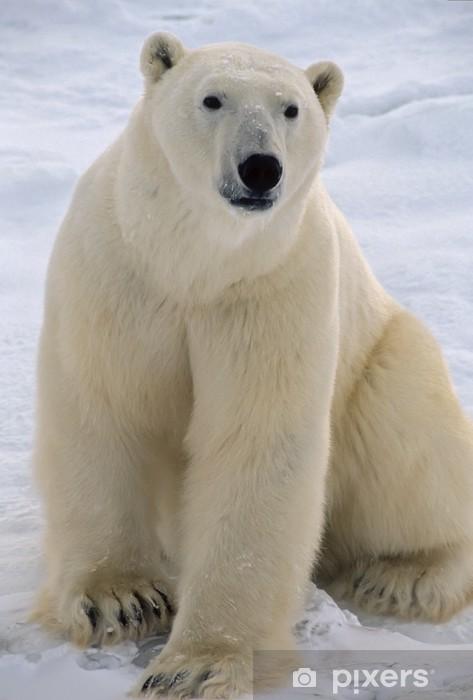 Pixerstick Aufkleber Eisbär in der kanadischen Arktis - Themen