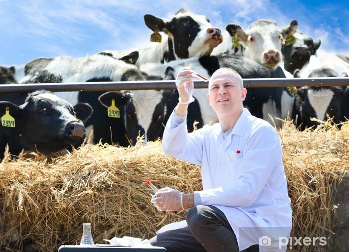 Naklejka Pixerstick Mężczyzna lekarz weterynarii krów w gospodarstwie odbywa analizuje - Zawody