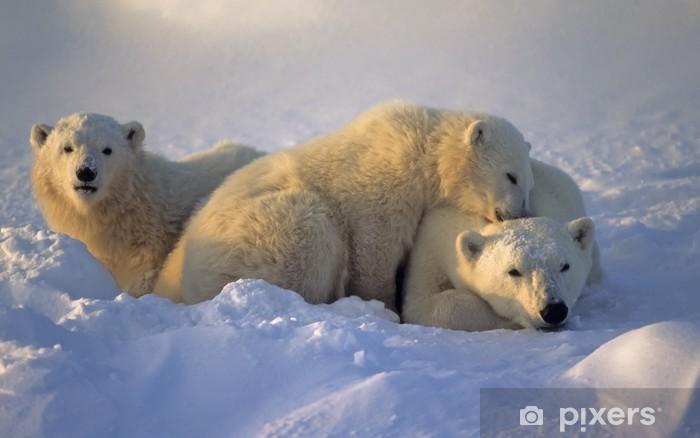 Polar Bear 42 D 25 Polar bear with...