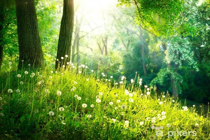 Forår Natur. Smukt Landskab. Grøn Grass og Træer Vinyl fototapet -