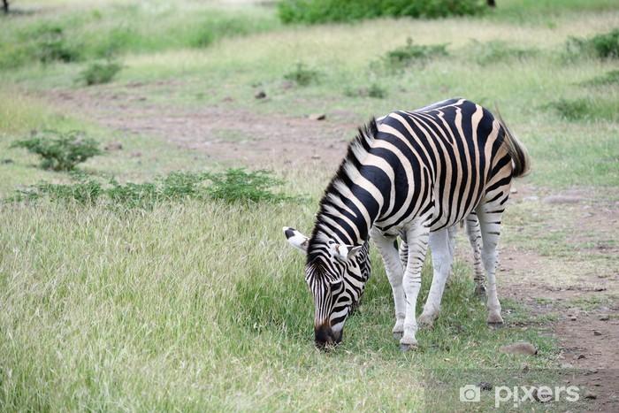 Papier peint vinyle Zebres - Afrique
