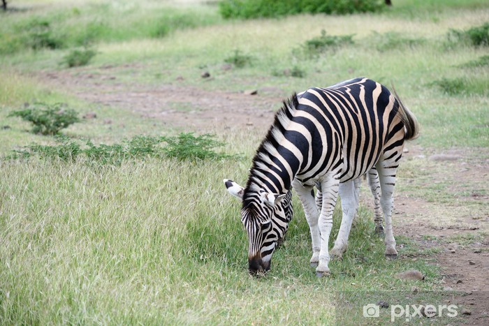 Sticker Pixerstick Zebres - Afrique