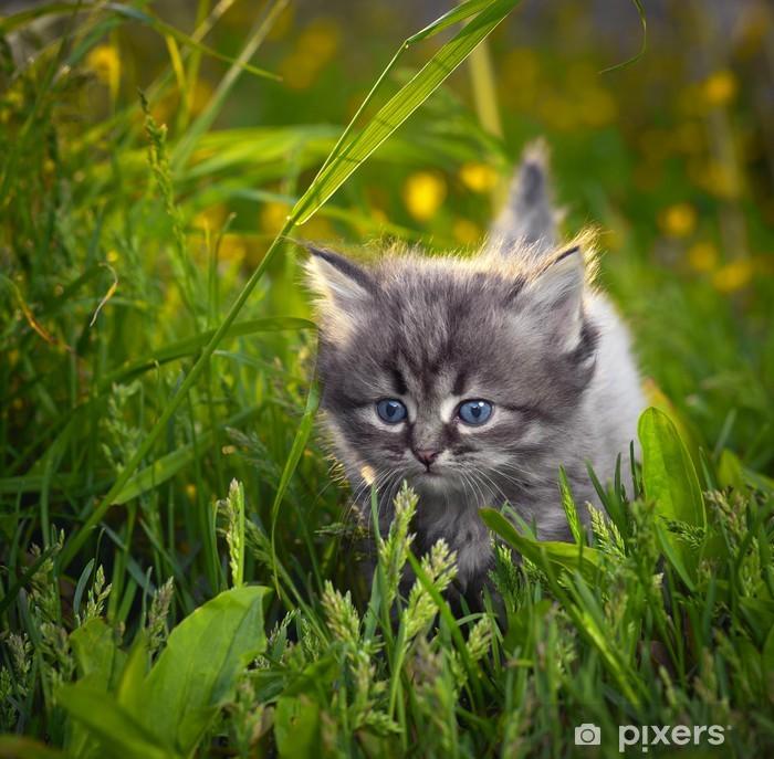 malá kočička mladá