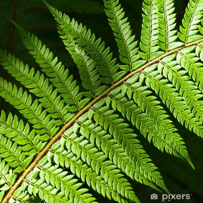 Sticker Pixerstick Felce pianta 1732 - Plantes