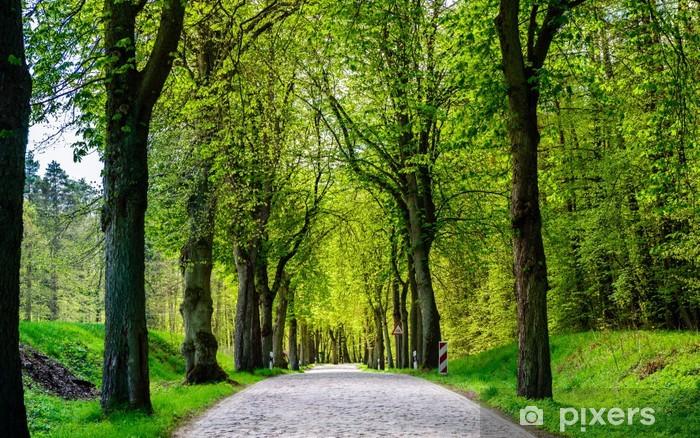 Carta Da Parati Viale Di Alberi Strada Di Campagna In Estate 3