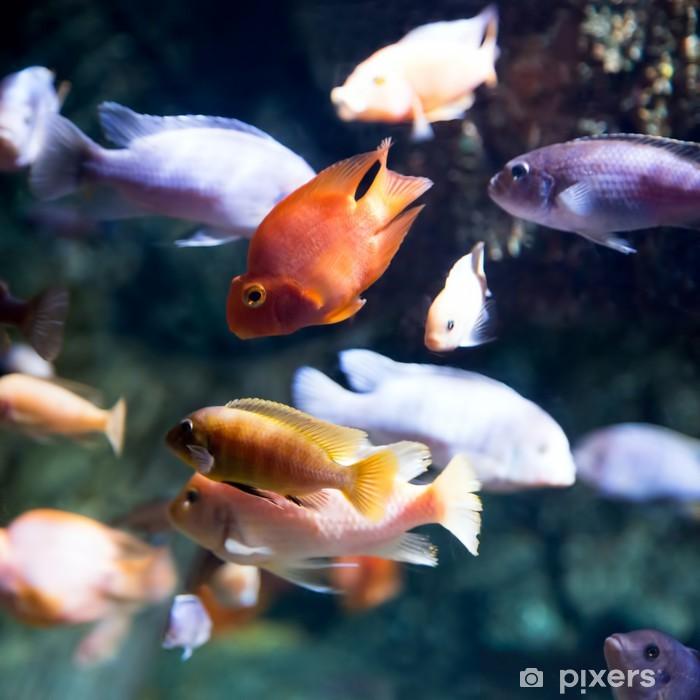 Photo of a tropical fish Pixerstick Sticker - Aquatic and Marine Life