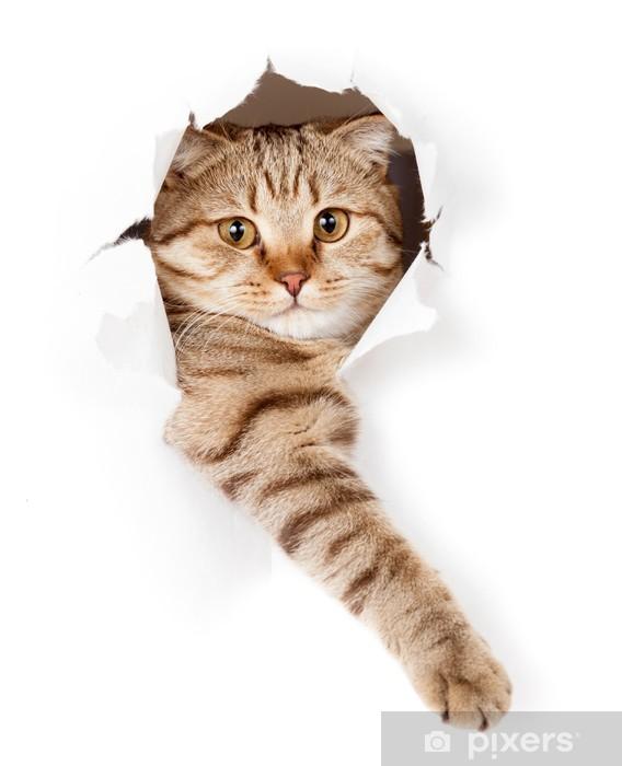 Adesivo Pixerstick Gatto in bianco buco carta da parati -