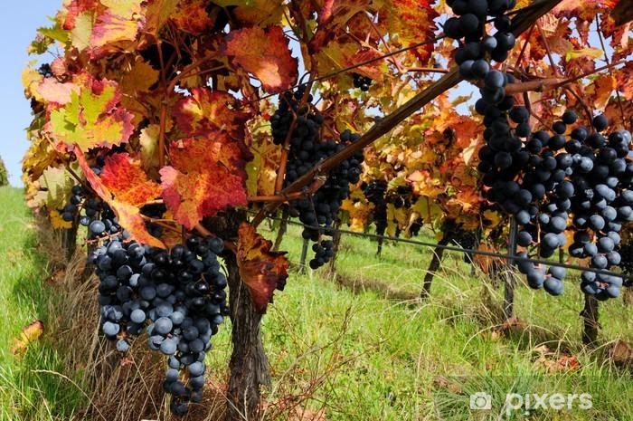 Papier peint vinyle Les raisins rouges avec un feuillage d'automne - Saisons
