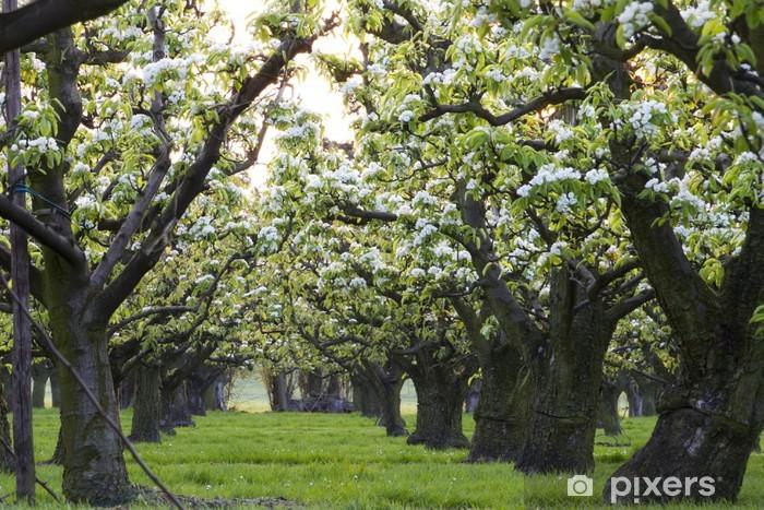 1a29ded61435 Carta da Parati Fila di alberi di mele • Pixers® - Viviamo per il ...