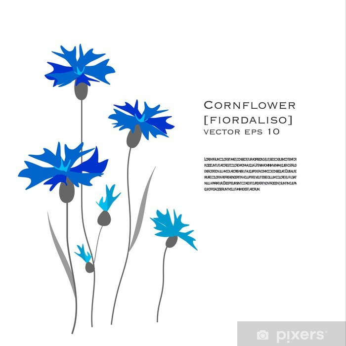 9631853a813eb9 Fototapeta Chaber kwiatów ilustracji • Pixers® • Żyjemy by zmieniać