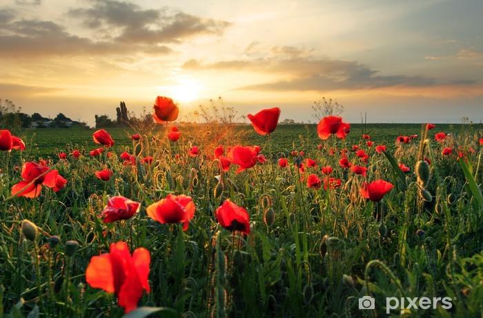 Papier Peint Autocollant Champ de coquelicots fleur au coucher du soleil - Thèmes