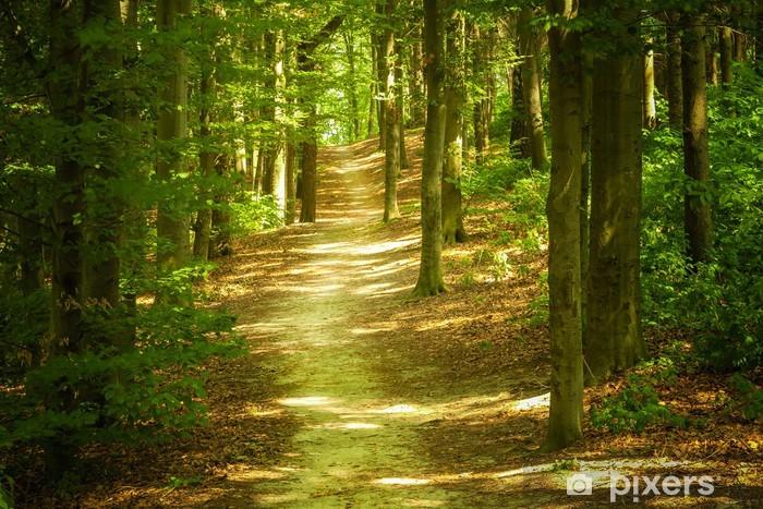 Fototapet av Vinyl Forest Landscape - Teman