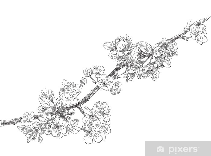 Hand Drawing Apple Flower Blossom Wall Mural Pixers