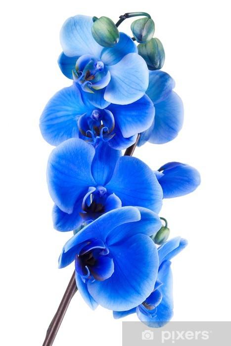 Sticker Pixerstick Orchidée bleue bouquet - Sticker mural