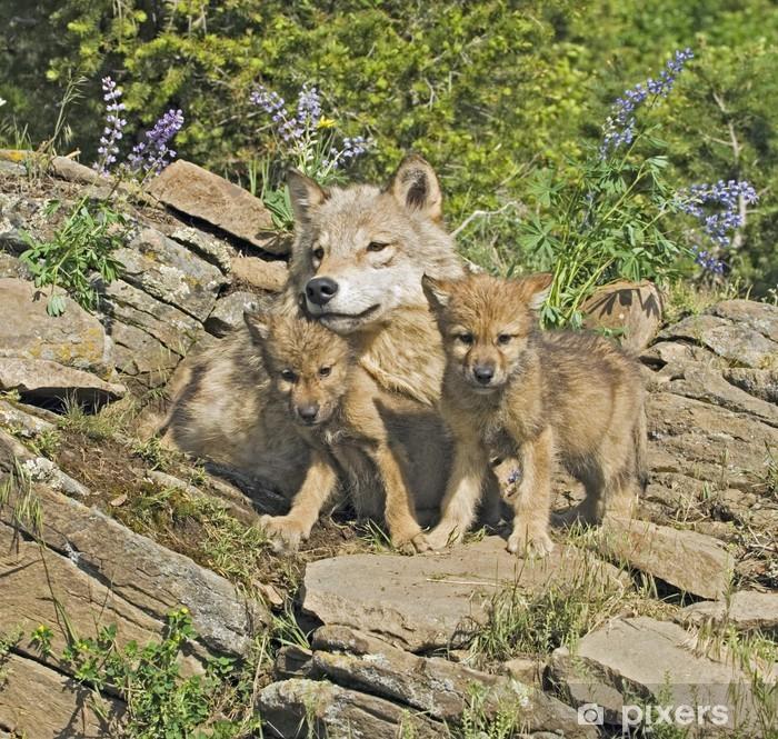 Papier peint vinyle Les loups gris sur le site - Thèmes