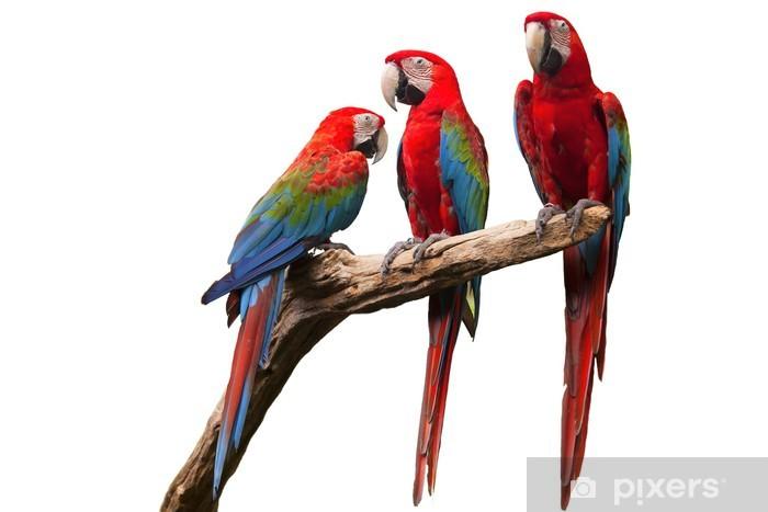 Fototapeta winylowa Papuga - Naklejki na ścianę