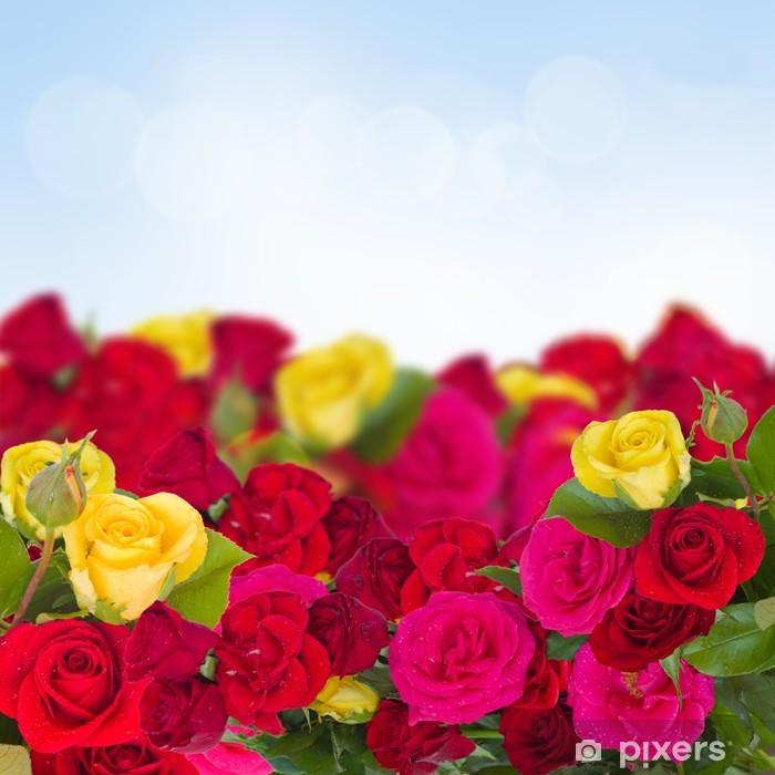 Plakat Róże ogrodowe - Szczęście