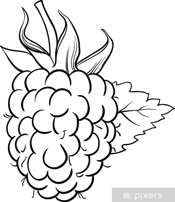 raspberry illustration for coloring book Pixerstick Sticker - Meals