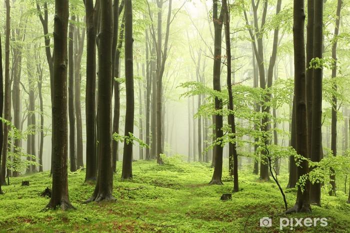 Papier peint vinyle Forêt de hêtres au printemps dans les montagnes - Plantes et fleurs