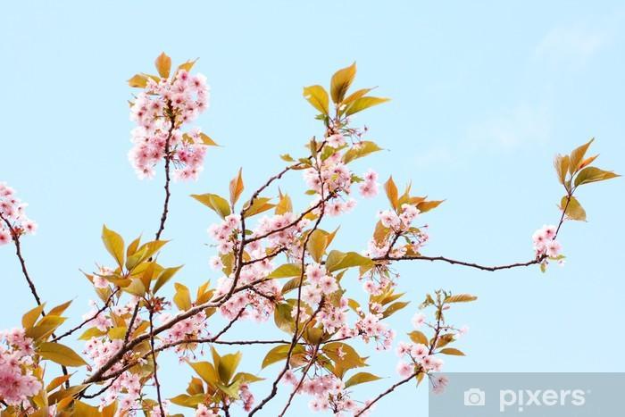 Papier Peint Japonais Rose De Fleurs De Cerisier Pixers Nous