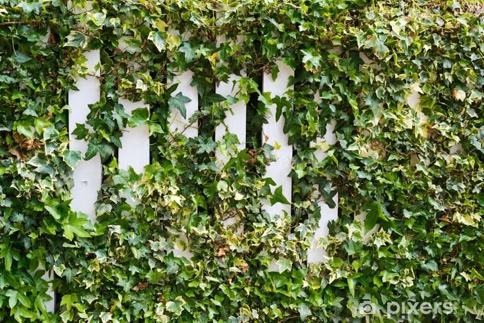 Parthenocissus tendril climbing decorative plant Vinyl Wall Mural - Urban
