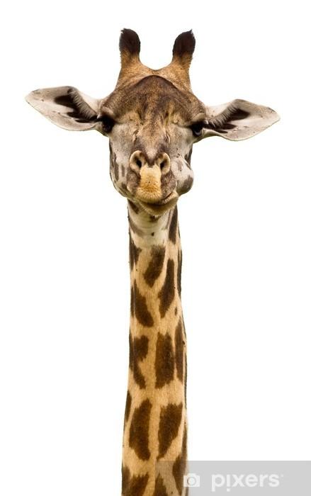 Giraffe head Isolated Vinyl Wall Mural - Wall decals
