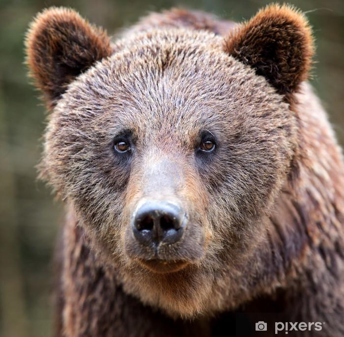 Sticker Pixerstick Les ours bruns dans les Carpates. - Thèmes