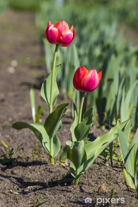 Sticker Pixerstick Tulipes colorées - Fleurs