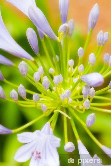 Papier peint vinyle Blooming Agapanthe - Fleurs