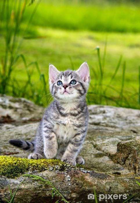 a cute little kitten in the garden grass Pixerstick Sticker - Themes