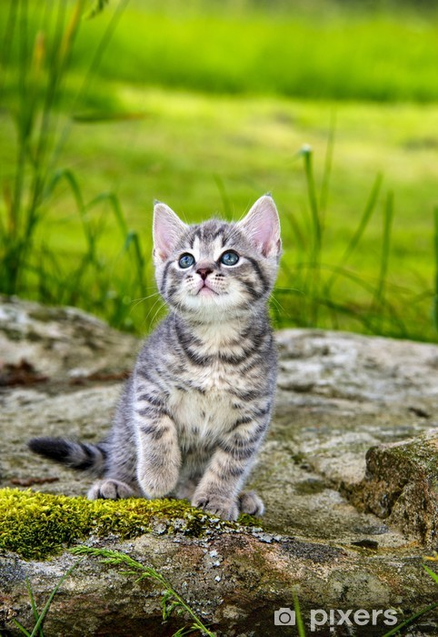 Sticker Pixerstick Un petit chaton mignon dans l'herbe du jardin - Thèmes