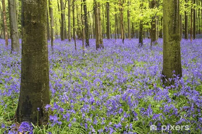 Naklejka Pixerstick Żywe błękitna dywan las krajobraz wiosna - Lasy