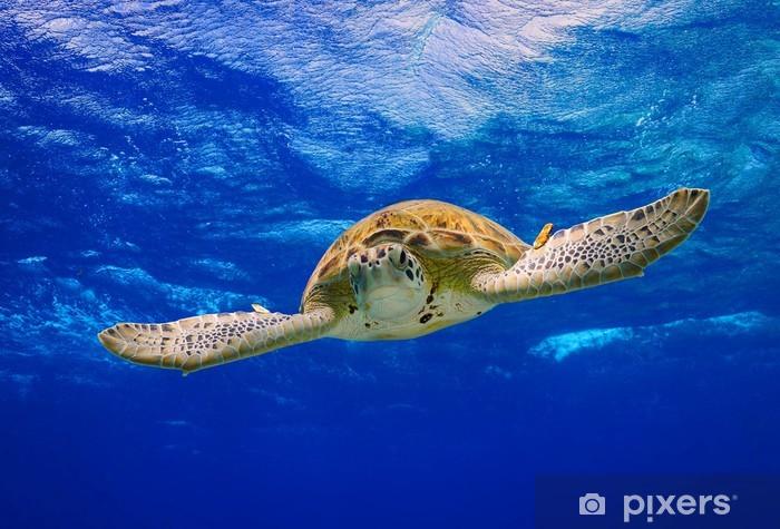 Papier peint vinyle Tortue de mer verte nager dans l'océan - Autres Autres