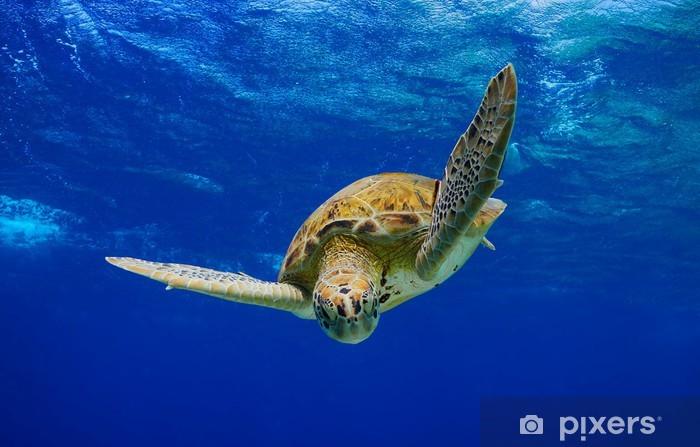 Fototapeta winylowa Zielony żółw morski malejącej w błękicie - Inne Inne