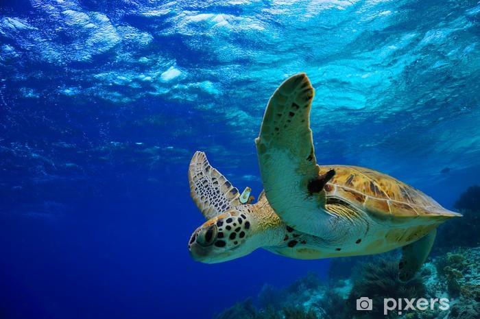 Papier peint vinyle Green Sea Turtle nage le long de récifs tropicaux - Autres Autres