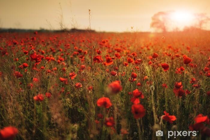 Vinyl Fotobehang Tegen de achtergrond van het veld van rode papavers mooie zon - Platteland