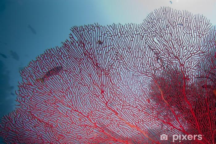 Fototapeta winylowa Kolorowe podwodne rafy Raja Ampat Papua, Indonezja - Pod wodą
