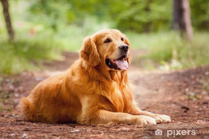 Papier peint vinyle Portrait d'un chien - Thèmes
