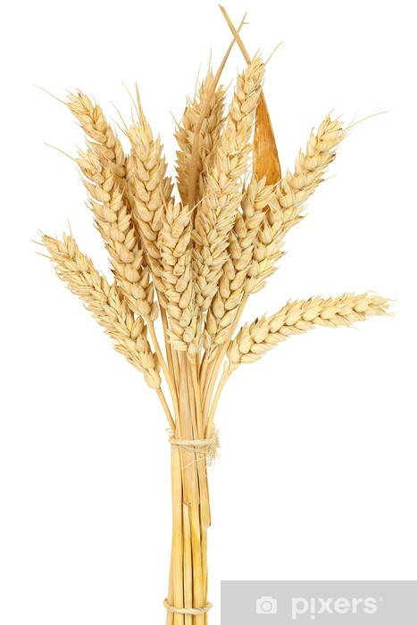 Naklejka Pixerstick Pszenica bundle - Rolnictwo